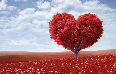 Amélioration cardiovasculaire